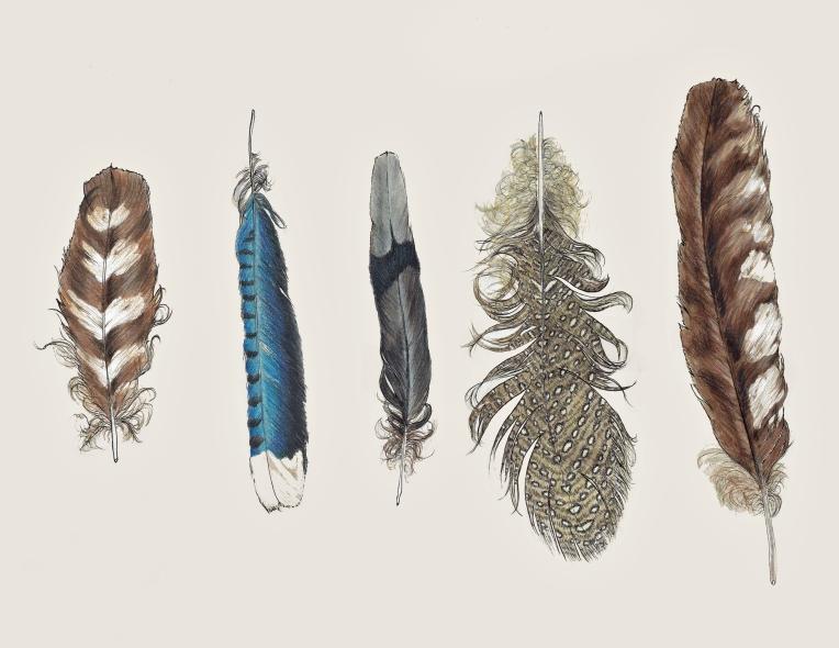 feathergroup