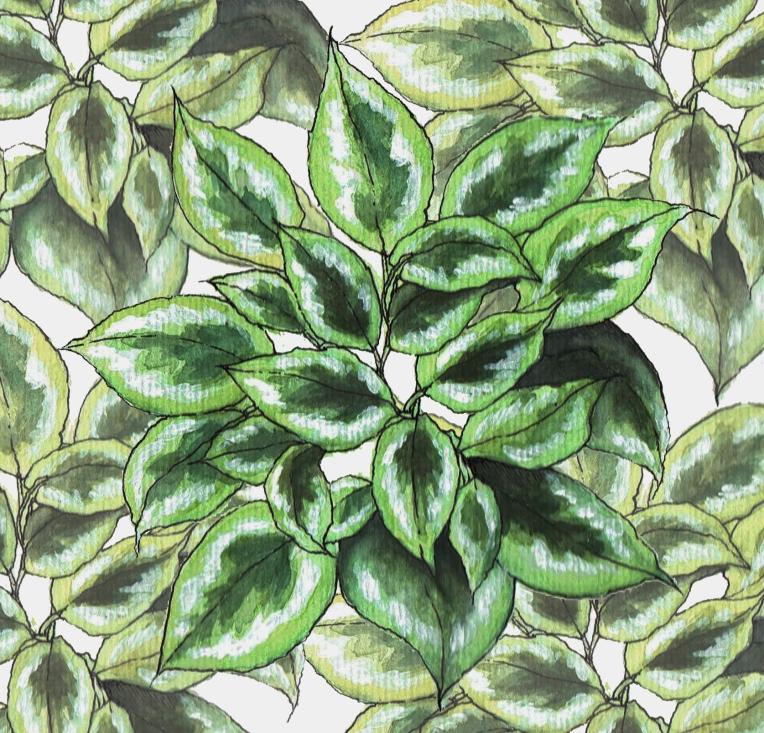 plantpattern